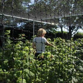 8m Walk In Fruit Cage